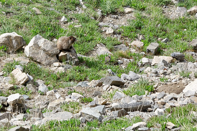 The obligatory photo of a marmot (there are lots of them everywhere at high elevation).